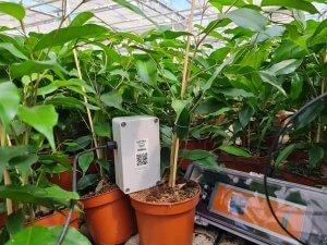Een fotosynthese-sensor van Sendot meet planten en stuurt data door via 30MHz.