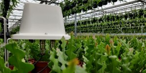 30mhz white connect casing measuring potted plants inside a greenhouse
